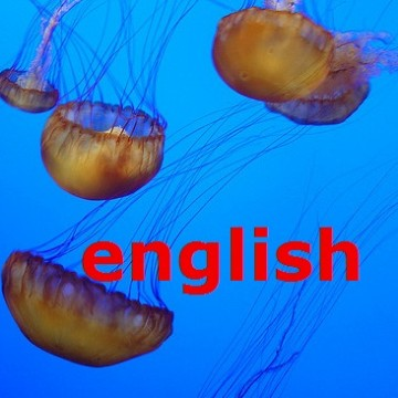 jellyfish_allie_caulfield_english2